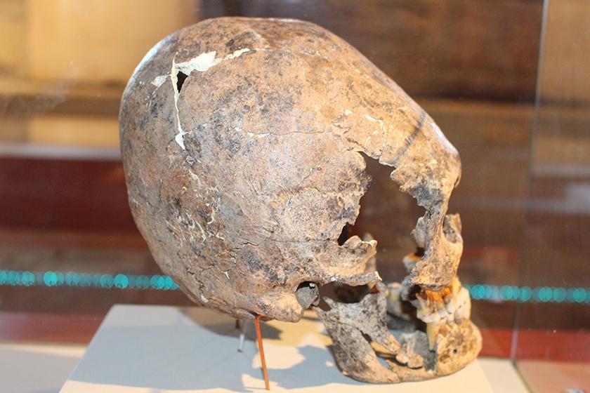 Um crânio mais alongado encontrado na região.